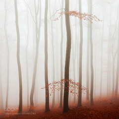 Red Forest (BostonHVAC167) Tags: autumn mist trees leaves landscape fog red forest mountains nature travel europe tree fall foliage branches colors mood atmosphere czech republic fine art beech trunks martin rak ore