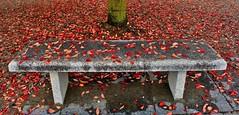 IMG_0555 (ornella sartore) Tags: panchina foglie autunno colori allaperto particolari
