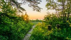 Wilderness State Park (Jess_Anne) Tags: puremichigan lakemichigan wilderness sunset lake beach trail pines upnorth park statepark wander sand goldenhour michigan camping sonya6000 sony