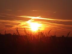 Sptsommerliche hren im Morgenrot (yve_all) Tags: morgenlicht morgendmmerung sunrise blickwinkel view licht light farben colours natur nature