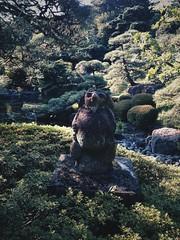 Tanuki (Coto Language Academy) Tags:  nihongo japanese japan jlpt katakana hiragana kanji studyjapanese funjapanese japonaise giapponese japones japanisch  japaneseschool cotoacademy