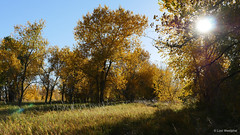 Arapaho Bend_MIN 338_20 (luciwest) Tags: colorado fortcollins ftcollins october autumn fallfoliage movingpostcard inacoloradominute arapahobend arapahoponds naturalarea park nature outdoors outdoor outside hiking fall autumncolors