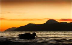 Loch Ness (McRusty) Tags: loch ness dores beach mallard duck sunset gloaming mountain water silhouette great glen highland scotland orange sky cloud clouds natural outdoor beauty