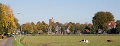 Elburg, Bagijnendijkje, Nederland (Hans Westerink) Tags: elburg panorama hanswesterink medieval monumenten gelderland canon landscape village valumme nunspeterweg bagijnendijkje koe cow vache
