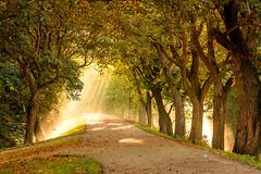 Heaven Gate's (betuwefotograaf) Tags: betuwe beesd marinwaerdt betuwefotograafnl morning landgoed trees gelderland geldermalsen noten notendijk