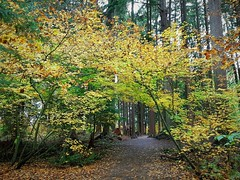 Autumn foilage (walneylad) Tags: loutetpark northvancouver britishcolumbia canada park parkland woods woodland forest urbanforest trees red yellow green brown leaves branches nature scenery october fall autumn bluesky clouds