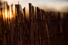 Early morning winter sun (V Photography and Art) Tags: bokeh backlit fence dof lowlight contrast light sunlight winter early morning web
