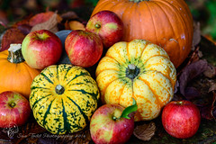 Autumn colour, pumpkins and apples. (Explore 29/10/2016) (Sue_Todd) Tags: alnwick appelsin autumn colours eglingham england food garden greatbritain green laranga northumberland orange oranje oranssi photographer red reds suetodd suetoddphotography uk unitedkingdom veg vegetable vegetables apelsin arancione czerwony greenish greens greeny groen grn grn grnn grn naranja pomaranczowy punainen rod rojo rood rosso rot rouge verdajn verde vermelho vert vihre yeil zielony