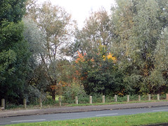 2016_10_170003 (Gwydion M. Williams) Tags: coventry britain greatbritain uk england warwickshire westmidlands autumn