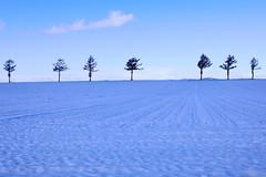 Seven Trees (tsuntsun3) Tags: hokkaido japan trees 7 seven snow winter 301a0895