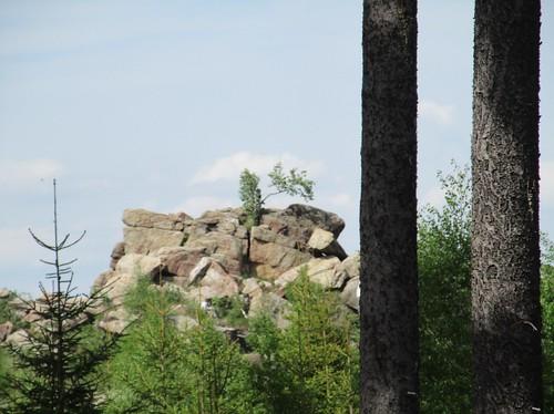 Fichten am Ottofelsen, Granit-Felsformation , NGIDn1623874631