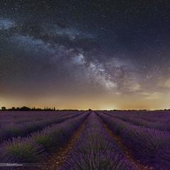 Milky way & lavender fields (Laurent Lamour) Tags: milky way voie lactée ciel night nightscape paysage nuit lavande champ fields lavender