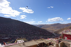DSC00717 (A lonely journey of life) Tags:             china sichuan luoruoxiang larunggar seda   xizang