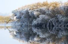White Heron (Artur Rydzewski) Tags: ardea alba ardeaalba greatwhiteheron largeegret commonegret bird waterreflection reflection czaplabiała czpla heron egret nature winter frost whitefrost hoarfrost thechallengefactory