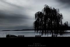 Autumn lake (fabriziobelia) Tags: travel italy trasimeno nature canon lake autumn