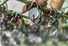 DarulShifa_009 (SaurabhChatterjee) Tags: andhra ashurkhana charmimar darulshifa darulshifadargahhyderabad darulshifahyderabad darulshifamosque heritage heritagewalkinhyderabad hws hyderabad intach photowalk photowalksinhyderabad saurabhchatterjee siaphotography siaphotographyin
