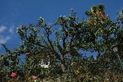 Rima Dadenji, the house where everything exists in green, 2016 (Rima Dadenji) Tags: spain andalusia andalucia granada albayzin albaycin nature garden trees roses permaculture environment agriculture fuji fujifilm fujifilmxt10 rimadadenji