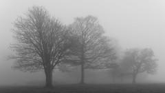 trees (neil.bulman) Tags: countryside longshawestate peakdistrict nature nationalpark derbyshire longshaw fog nationaltrust derbyshiredalesdistrict england unitedkingdom gb