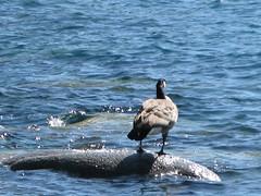Lake Tahoe NEVADA 046 (listerdouglas) Tags: sandharbor nevadastatepark laketahoe