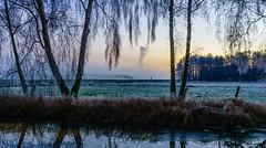 walk (iltis-aura) Tags: mksphoto moor sonyalpha6000 winter