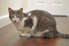 DSC_0082 (kaymann+l+woo) Tags: catsofinstagram cats cute