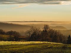 MARIAN SIMON PHOTOGRAPHY (MARIAN SIMON PHOTOGRAPHY) Tags: landschaft landscape outdoor natur nature omd nebel fog olympusomdem1 olympus em1 mzuiko75mmf18