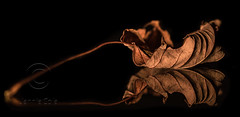 DSC_0927 (colejennie) Tags: autumn leaves patterns nature light shadows illuminate crisp dry reflection mirrorimage