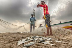 Extracting fish from the net (Aravindan Ganesan) Tags: cwc556 chennaiweekendclickers mychennai wideangle sadras fishermen fishing clouds earlymorning net tokino1116 canon600d canon cwc