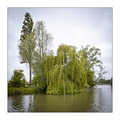 Clairmarais (07). (Scubaba) Tags: france square europe couleurs arbres marais carré pasdecalais audomarois
