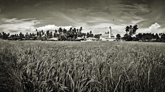 panorama with sony xperia go