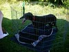GreyhoundPlanetDaySept132009007