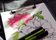 Work in progress, peony (Oxana Kostromina) Tags: flower ink workinprogress marker
