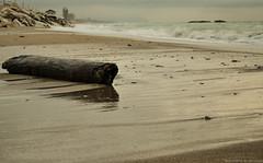 Uno (Bettinetta) Tags: water nikon flickr mare acqua tronco marche legno civitanova