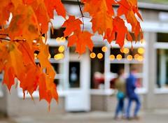 Autumn on Capitol Hill (sea turtle) Tags: seattle city autumn trees urban orange tree fall bokeh capitolhill circlesofconfusion