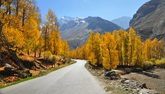 Autumn (mala singh) Tags: road autumn trees india mountains colours himachal pradesh lahaulspiti