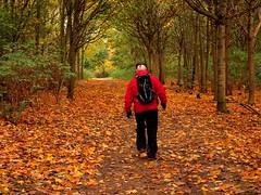 A walk in the woods (saxonfenken) Tags: autumn trees red people fall leaves path candid frombehind thumbsup gamewinner 7034 challengeyou challengewinner a3b friendlychallenges thechallengefactory storybookwinner pregamesweepwinner 7034people
