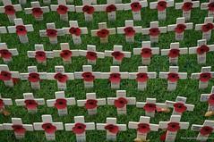 Remembrance... (antwerpenR) Tags: travel europe cross belfast poppy poppies crucifix northernireland warmemorial inmemoriam ulster 5photosaday epz1650mmf3556oss