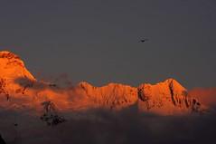 Sunrise over Mt Sebastopol Mt Cook National Park NZ (mpp26) Tags: park light newzealand cloud mountain snow colour bird sunrise ridge national mtcook