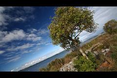 * (Henrik ohne d) Tags: ocean tree grass clouds bay balticsea rgen efs1022mm gager eos400d hagenschewiek hitechnd09gradse hoyapro1cirpl october2013