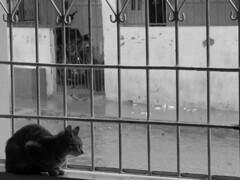 """E o tempo passa. (""""Ajustando o foco"""") Tags: branco chuva preto gato tempo proteo"""
