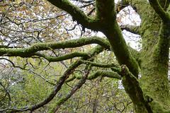 Hound Tor - Dartmoor (Chris Martin Photography) Tags: ed nikon devon nikkor moor dartmoor vr av lightroom 2013 d3200
