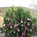 Trees_of_Loop_360_2013_058