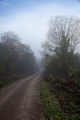 Navarra. Otoo 2013 (VIII) (Angel Villalba) Tags: autumn fog leaf vegetation navarra ocher