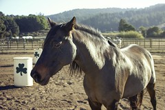 Nov072013_1371 (melaniebleu) Tags: ranch horse barn rural countryside country hills arena pony stables