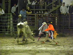 DSCN5255 (Barbwire Gypsy) Tags: cowboys december patrick bull riding bullfighter fl kenny rider kissimmee riders ksa kline howell bullfighters 2013 patrickhowell skinnykenny skinnykennykline