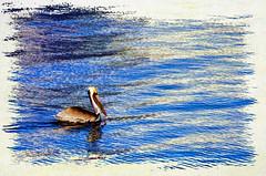(Artypixall) Tags: california texture sandiego pelican embarcadero