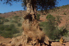 Mystery of the Olive Tree (bernawy hugues kossi huo) Tags: new tree mystery happy year breath olive f mohamed futur 2014 wiliam najma dankenbring