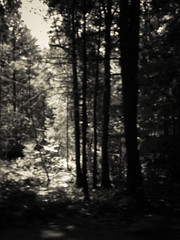 The Forest of Shining Colours II (Immortal Zoddo) Tags: trees light shadow blackandwhite bw white black tree nature forest dark blackwhite shadows gloomy darkness decay gothic goth ground forgotten desolate shining decaying desolation forestofshiningcolours