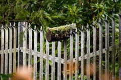 Log Stuck On Fence (JonEvans94) Tags: park wood tree metal swansea fence log nikon bars stuck walk singleton d3200