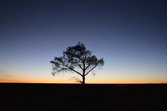 474 (Bo Chambers) Tags: tree silhouette dawn one nikon dusk horizon lone sooc d7100
